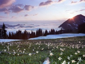 Washington Landscape Wallpaper