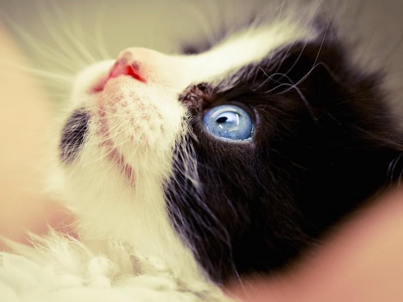 Cat Staring Up Wallpaper