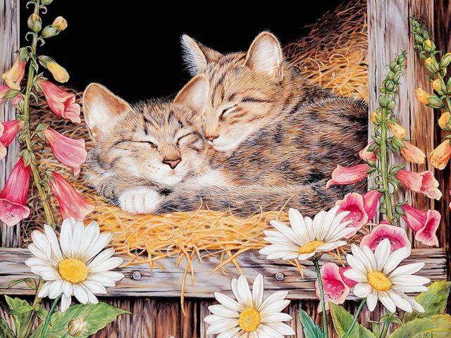 Kittens Sleeping Painting Wallpaper
