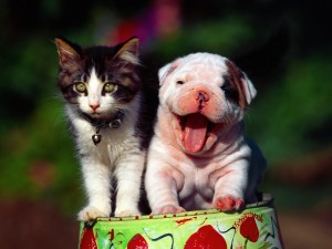 Cute Cat-Dog Wallpaper