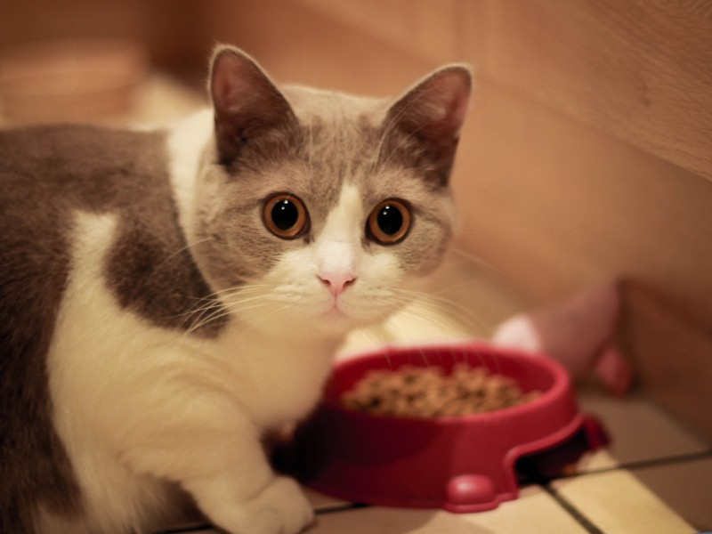 Cat Meal Time Wallpaper