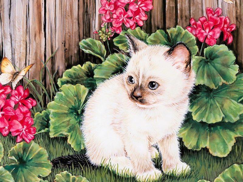Kitten Butterfly Painting Wallpaper