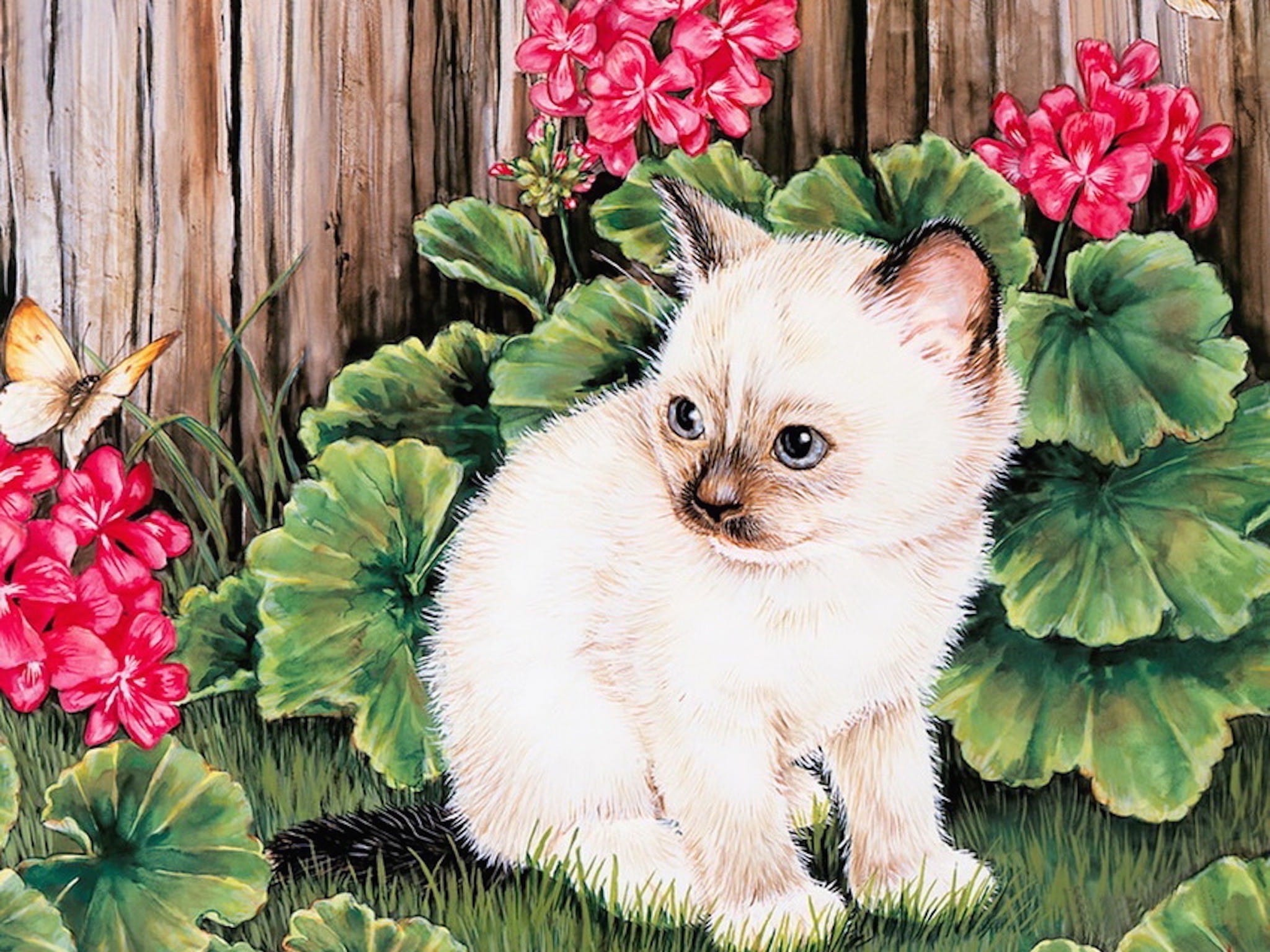 Cats Desktop Cool Wallpapers Hd Backgrounds Page 4 Of 5