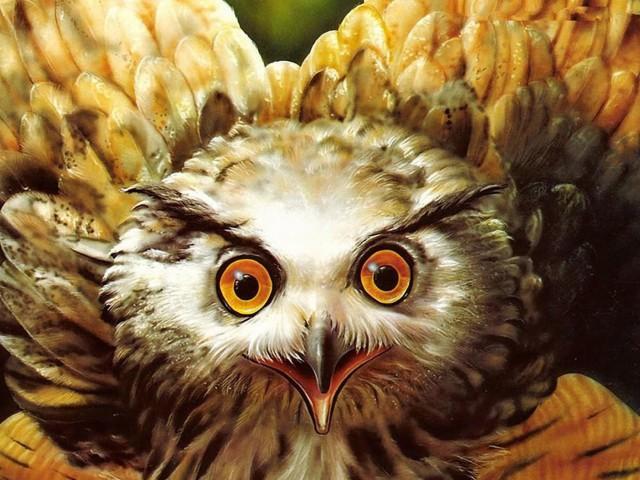Owl Eyes Painting Wallpaper