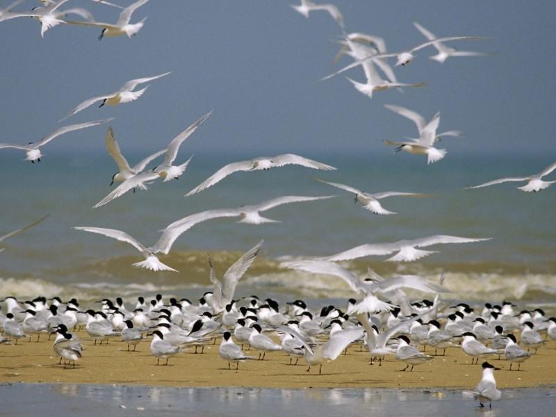 Seabirds Wallpaper