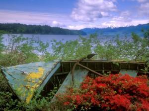 Abandoned Boat, Hood Canal, Washington