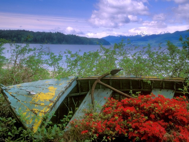 Abandoned Boat, Hood Canal, Washington
