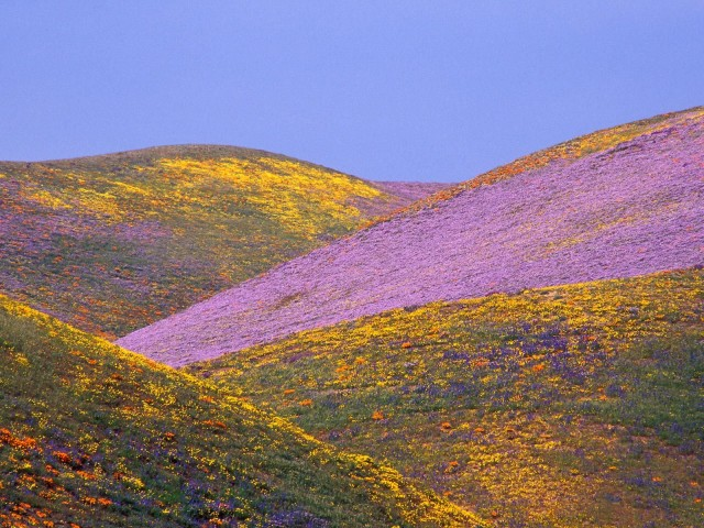 Ablaze With Spring Colors, Gorman, California