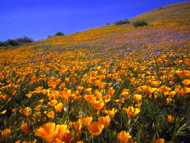 Antelope Valley Hillside, California