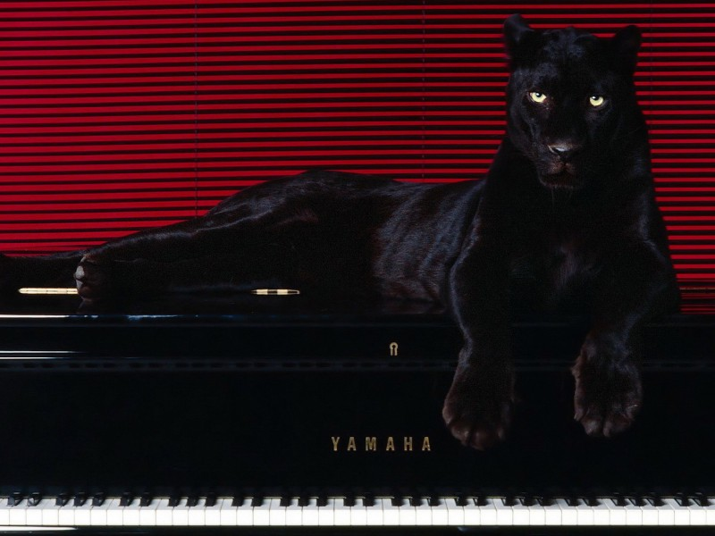 Black Panther Piano Wallpaper