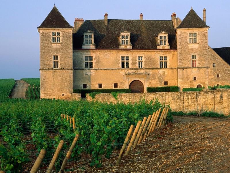 Clos de Vougeot Vineyard France Wallpaper