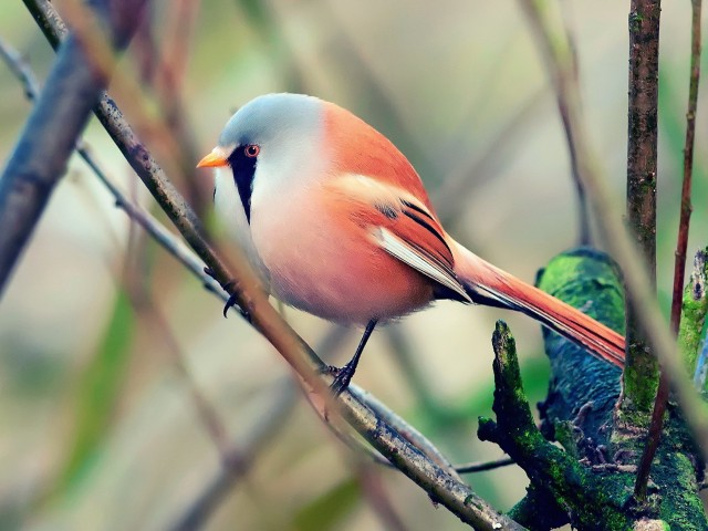 Colorful Bird Perched Wallpaper