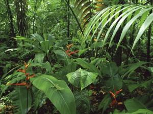 Costa Rica Rainforest Wallpaper