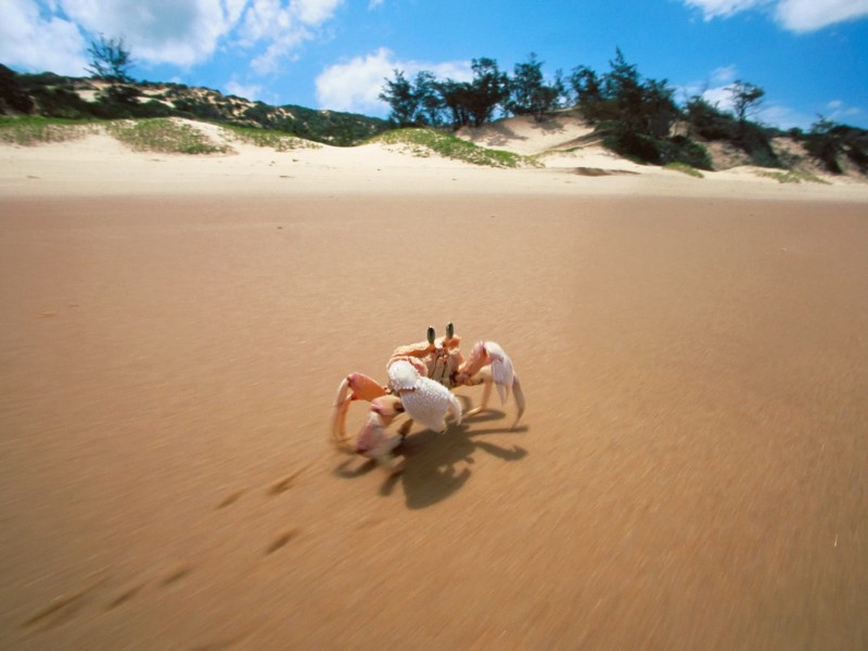 Crab Bazaruto Island Mozambique Wallpaper