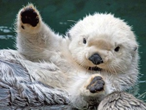 Cute Baby Sea Otter Wallpaper