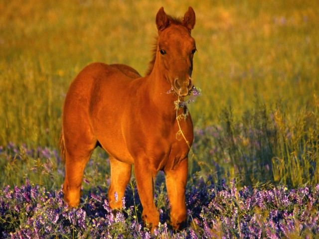 Cute Foal Horse Wallpaper