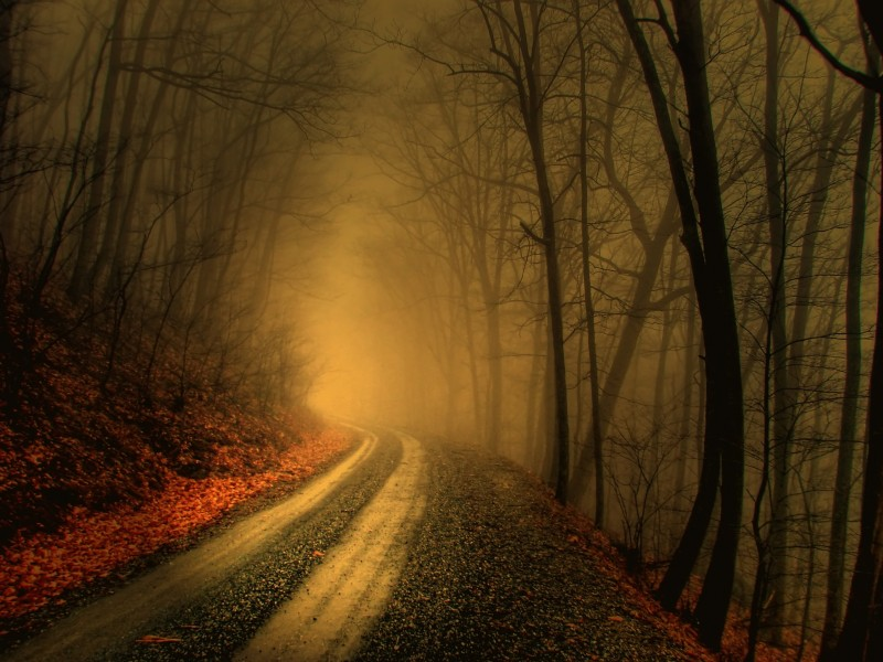 Foggy Path Forest Wallpaper