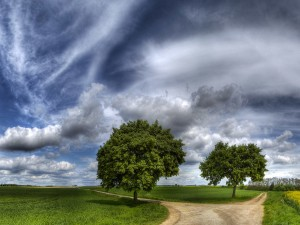 Green Trees Dirt Road Wallpaper
