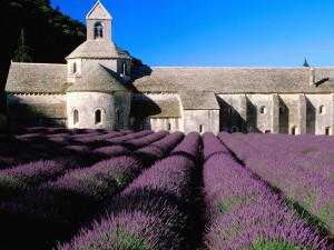 Lavender Field Abbey of Senanque France Wallpaper