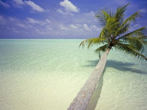 Maldives Palm Tree Wallpaper