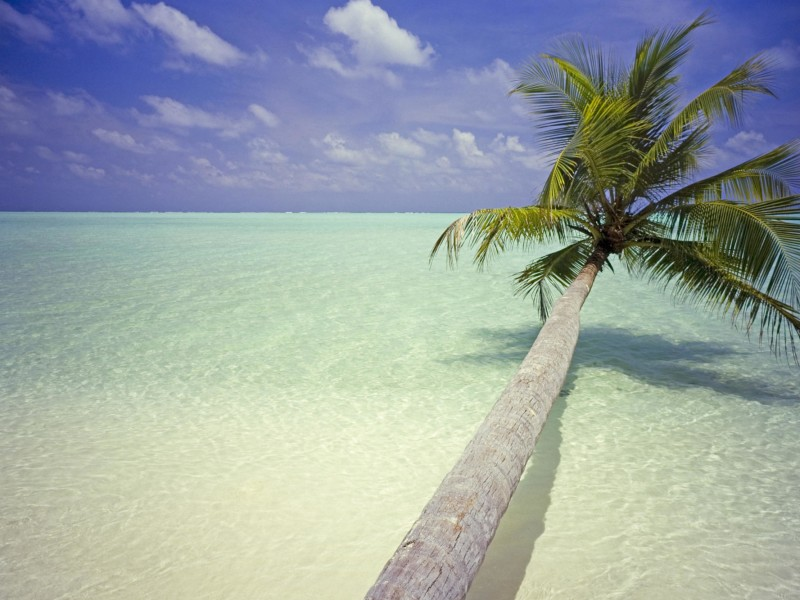 Maldives Palm Tree Wallpaper