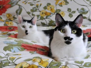 Mustache Cats Wallpaper
