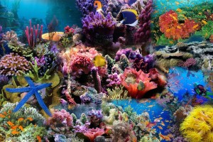 Red Sea Coral Reef Fish Wallpaper