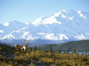 Snow Capped Mountain Alaska Wallpaper