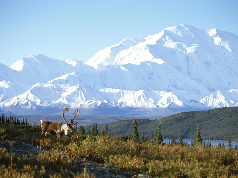 Snow Capped Mountain Alaska Wallpaper