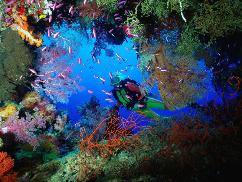 Soft Coral Fiji Dive Wallpaper