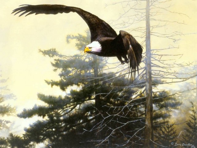 Bald Eagle Painting Wallpaper