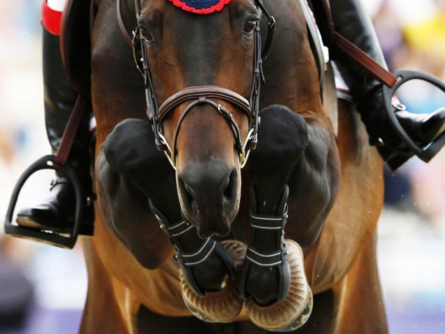 Equestrian Sport Wallpaper