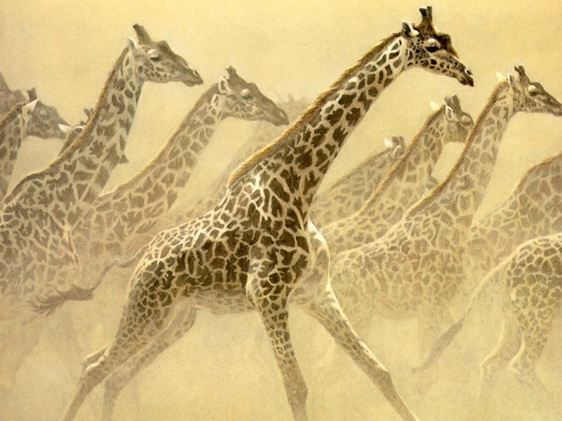Giraffes Painting Wallpaper