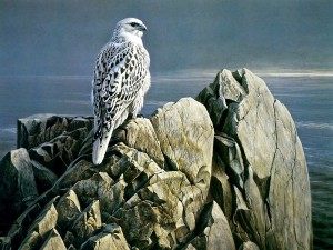 Gyrfalcon Painting Wallpaper
