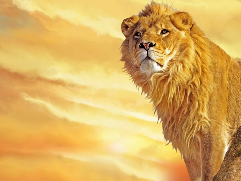 Lion Painting Wallpaper