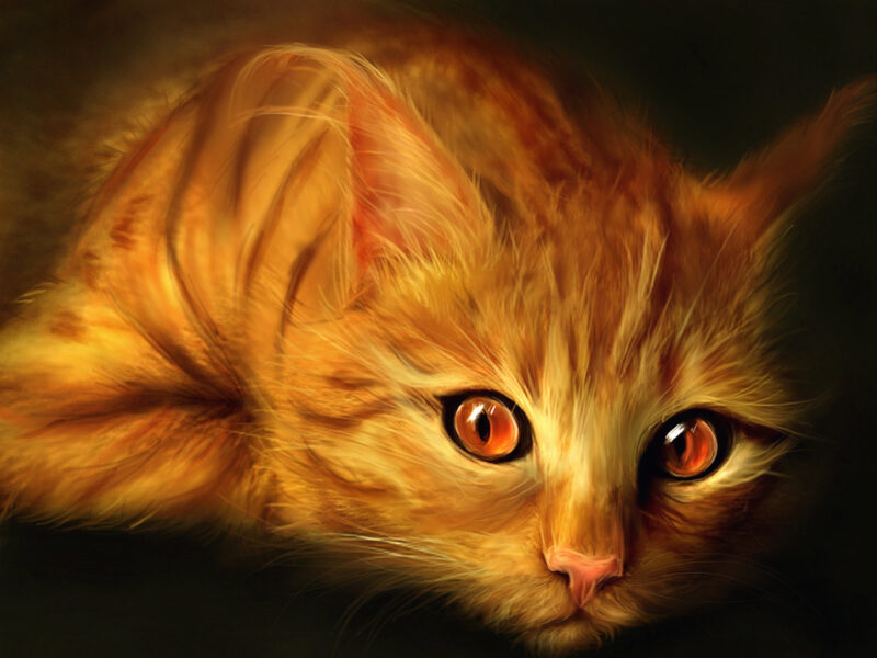 Orange Cat Painting Wallpaper