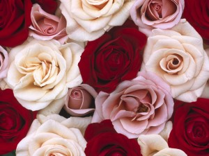 Romantic Roses Wallpaper