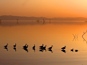 Wading Birds Enjoying Sunset Wallpaper
