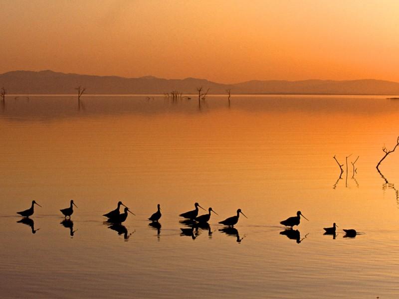 Wading Birds Enjoying Sunset Wallpaper