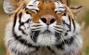 Animals 117