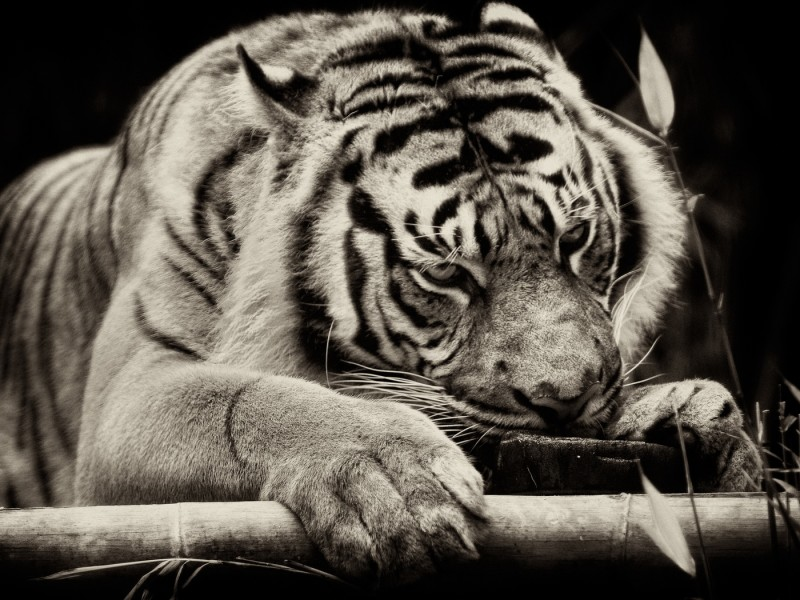 Animals 144