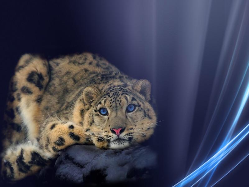 Animals 151
