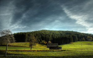 Landscapes 42