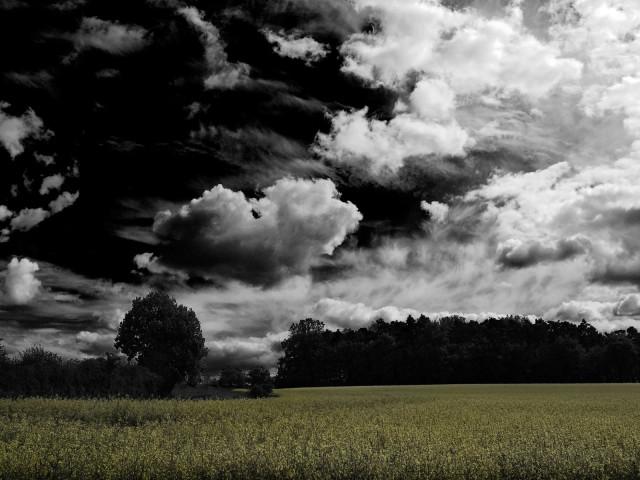 Landscapes 79