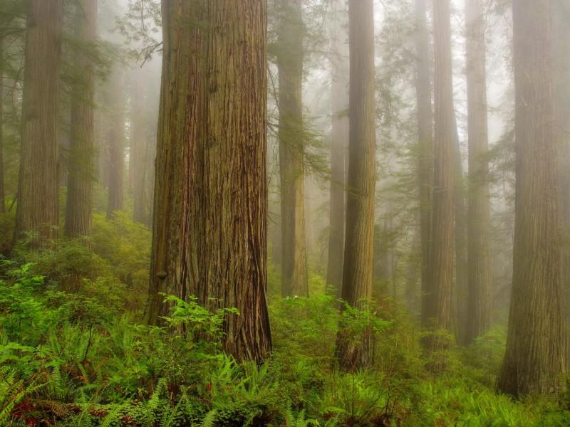 Nature 101.jpg