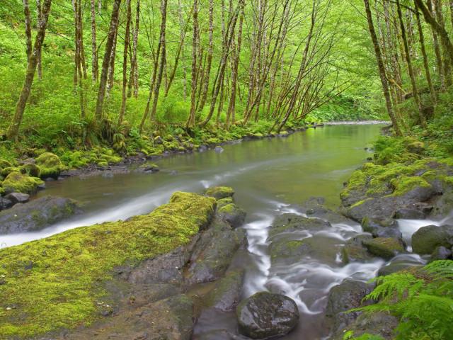 Nature 104.jpg