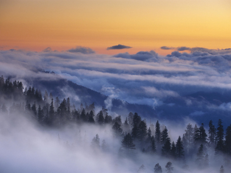 Trees In Fog At Sunset In Yosemite