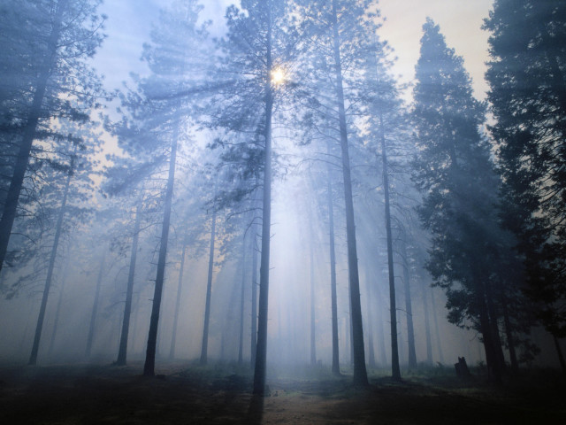 Smoke Rays From A Forest Fire, Horizontal Landscape In Forest