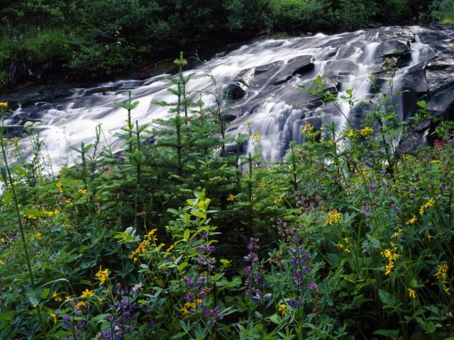 Nature 116.jpg