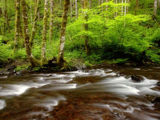 Nature 56.jpg